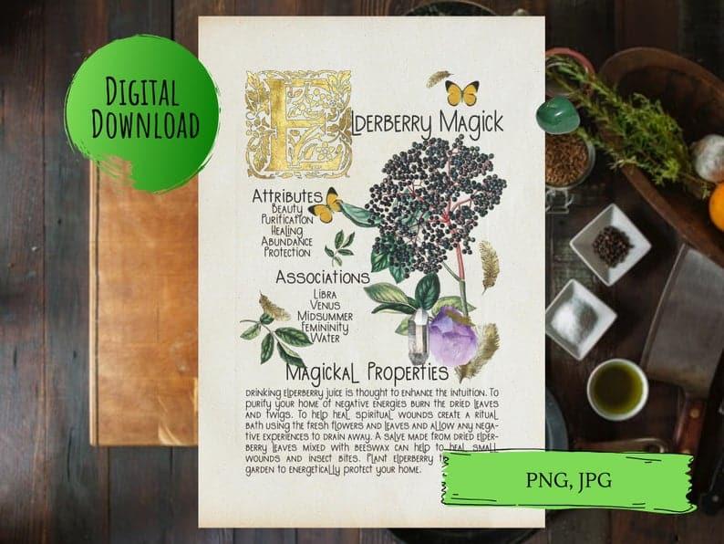 magickal properties of elderberry book of shadows page