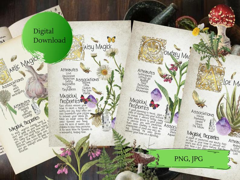 bundle of book of shadows pages about herbs