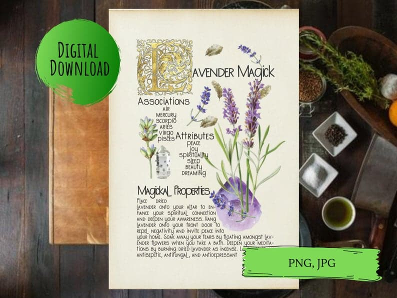 magickal properties of lavender book of shadows page