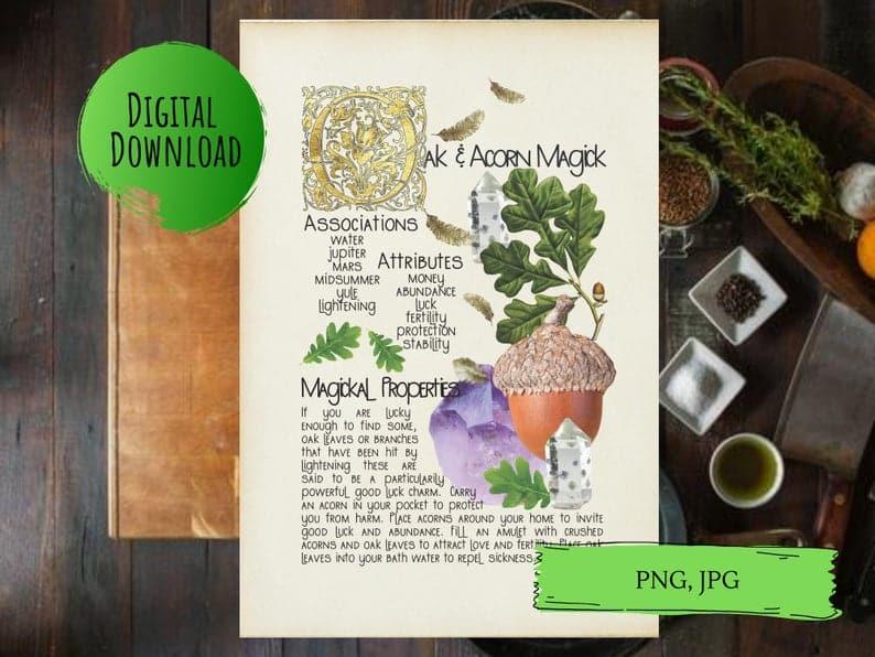 magickal properties of oak and acorns book of shadows page