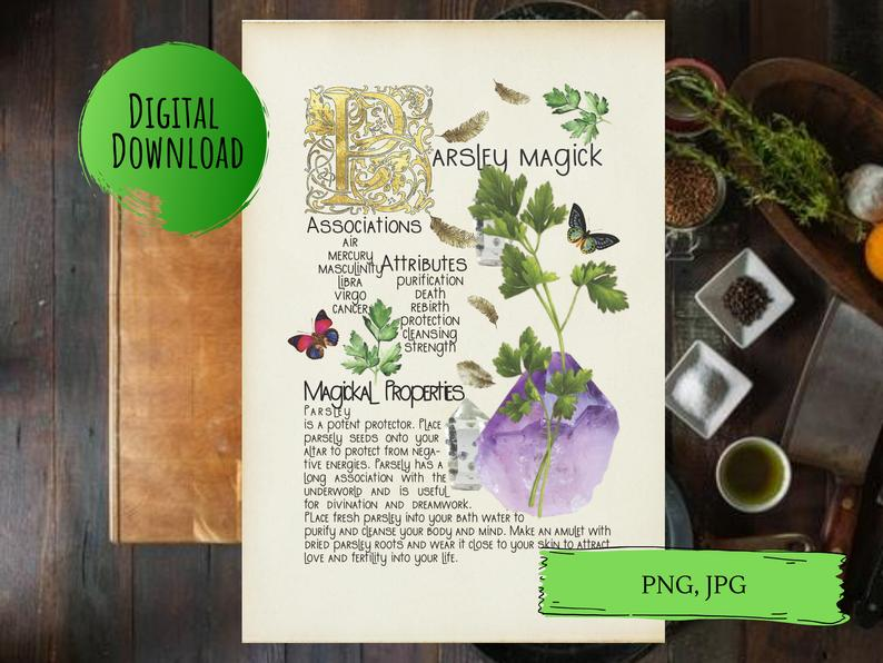 magickal properties of parsley book of shadows page