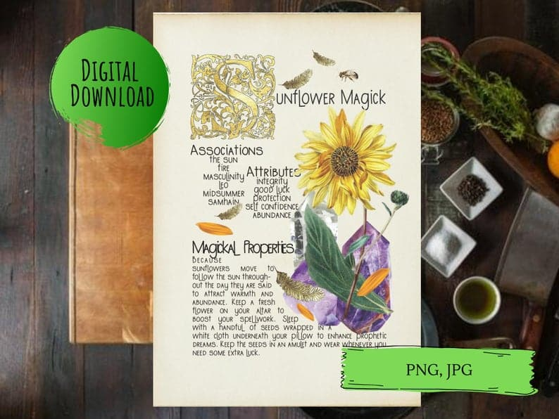 magickal properties of sunflowers book of shadows page